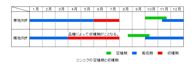 ニンニクの定植期と収穫期
