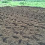 野菜栽培での畑とプランターの違いをあげてみると