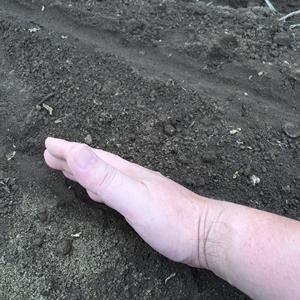 種蒔き後の土かけ