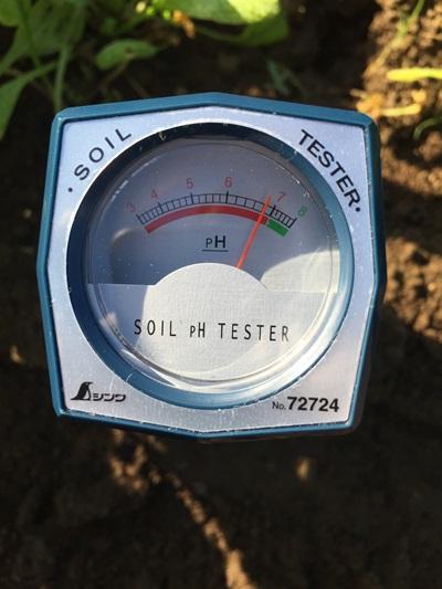 ホウレンソウ畝の酸度