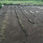 我が家の家庭菜園の大雨による作物被害