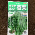 鍋、胡麻和え、天ぷら、サラダ、美味しい春菊の栽培9月~2月