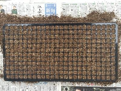 トレーに種蒔き倍土を入れた所