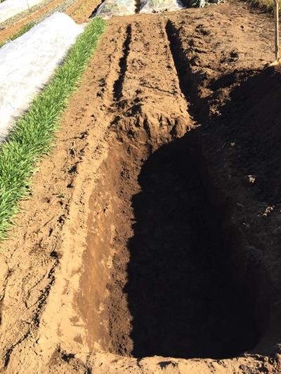 1日の穴掘りの作業成果の写真
