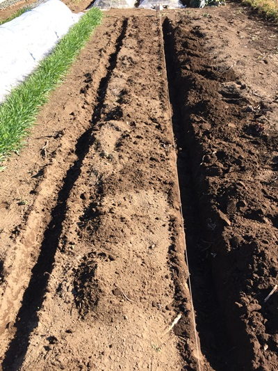 穴を掘る場所の目印をつけた写真