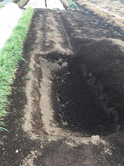 穴掘り前の写真