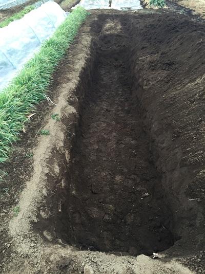 穴掘り作業後の写真