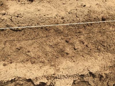ホウレンソウ種まき後の土かけ