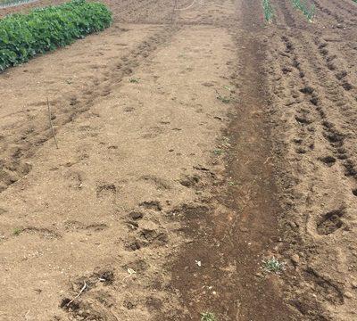 20160326現在の畑の境界線
