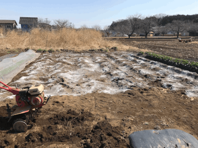 ネギの栽培予定場所に苦土石灰をまいたところ