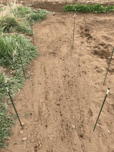 肥料と土を混ぜ込むようにする