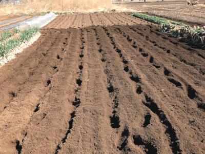 畑を良く耕す