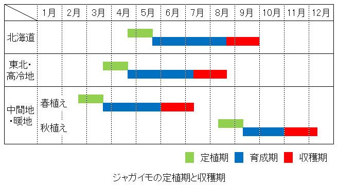 ジャガイモの定植期と収穫期