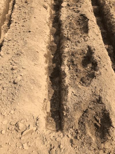 種いもに土をかける