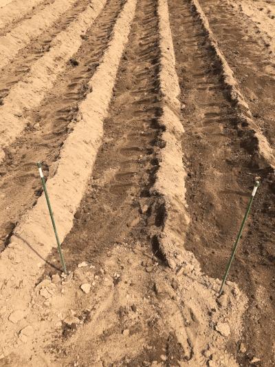 足で土をかけた状態